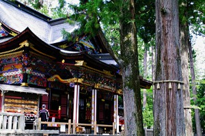 ご神木と神社